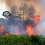 PARÁ É O 2º ESTADO COM MAIS QUEIMADAS NA AMAZÔNIA NO MÊS DE AGOSTO DE 2021